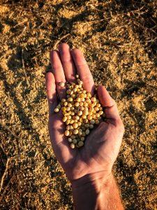 trigo turismo missões sao miguel graos agricultura