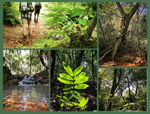 trilhas e caminhadas em são miguel das missões tenondé park hotel ecologia